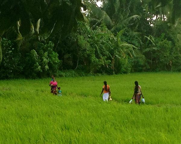 sri lanka fields inspiration